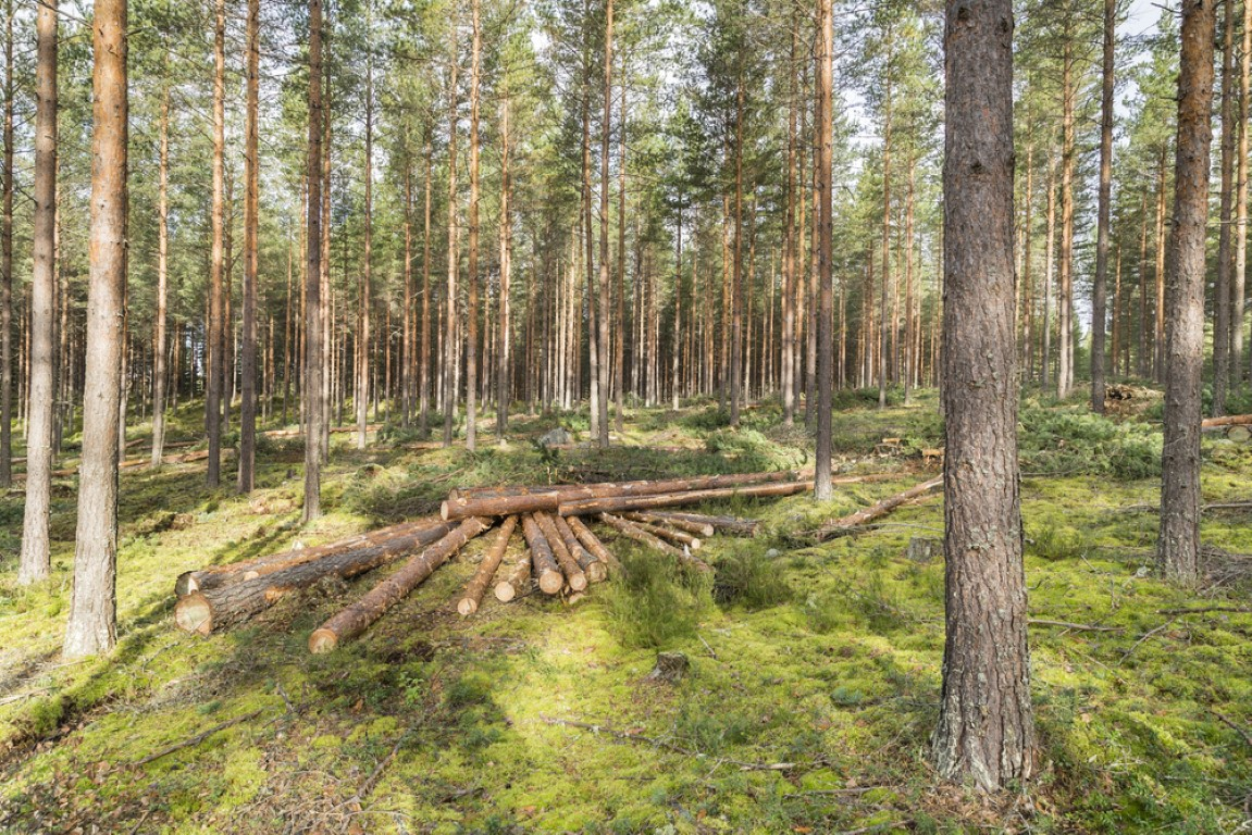 Finland Natural Resources