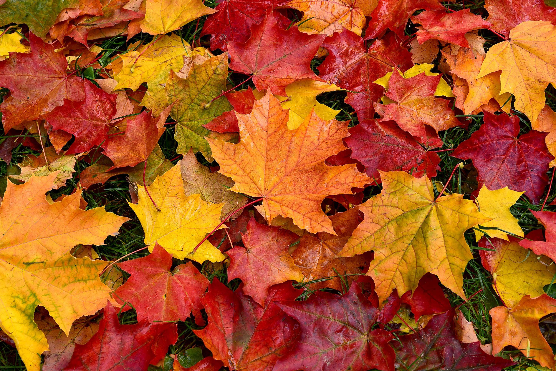 Herfstbladeren.jpg (3000Ã?2003)