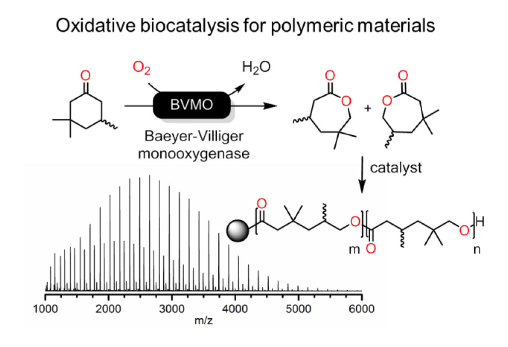 Oxidatieve biocatalyse voor polymere materialen