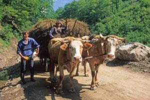 Boer met paard en wagen