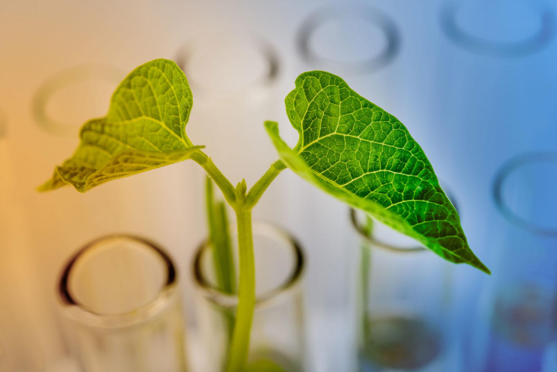Kennis drijft de biobased chemie in het Noorden