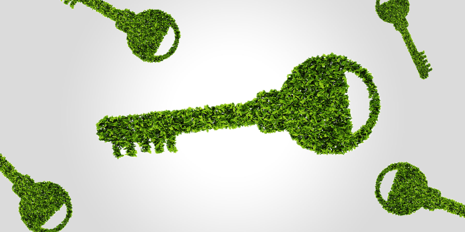 Sleutelrol voor biomassa in klimaatplannen