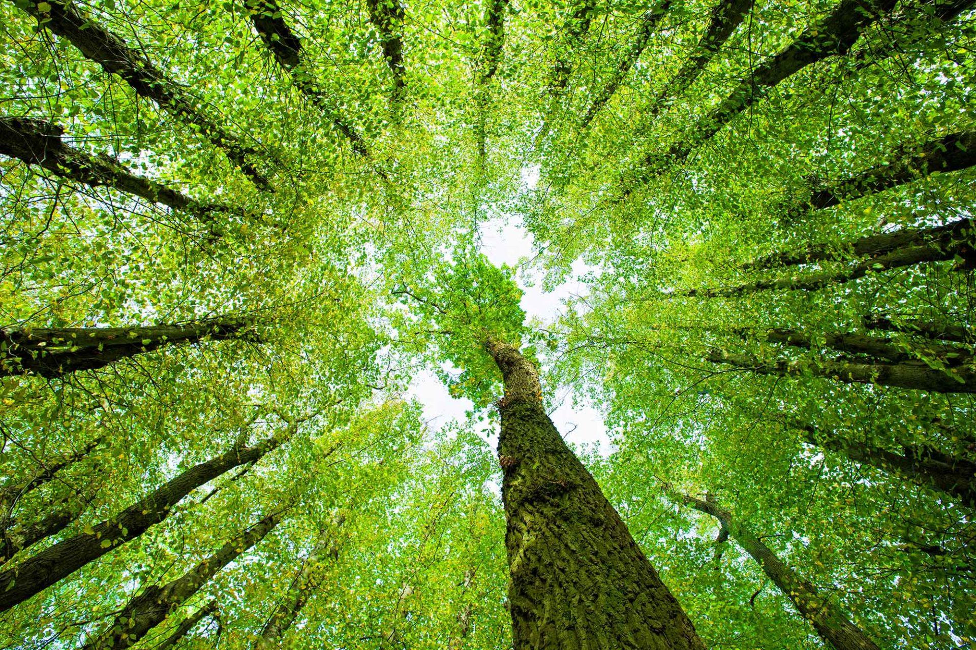 Bomen reiken omhoog