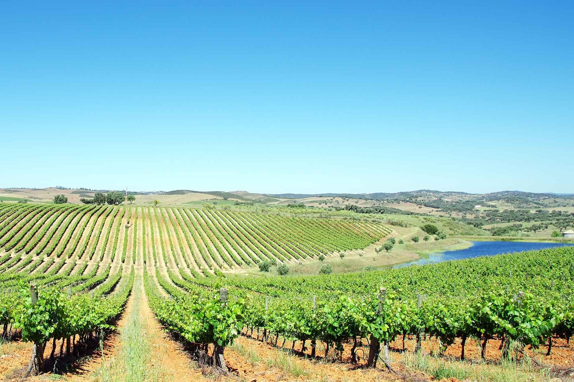 Wijngaarden in Portugal