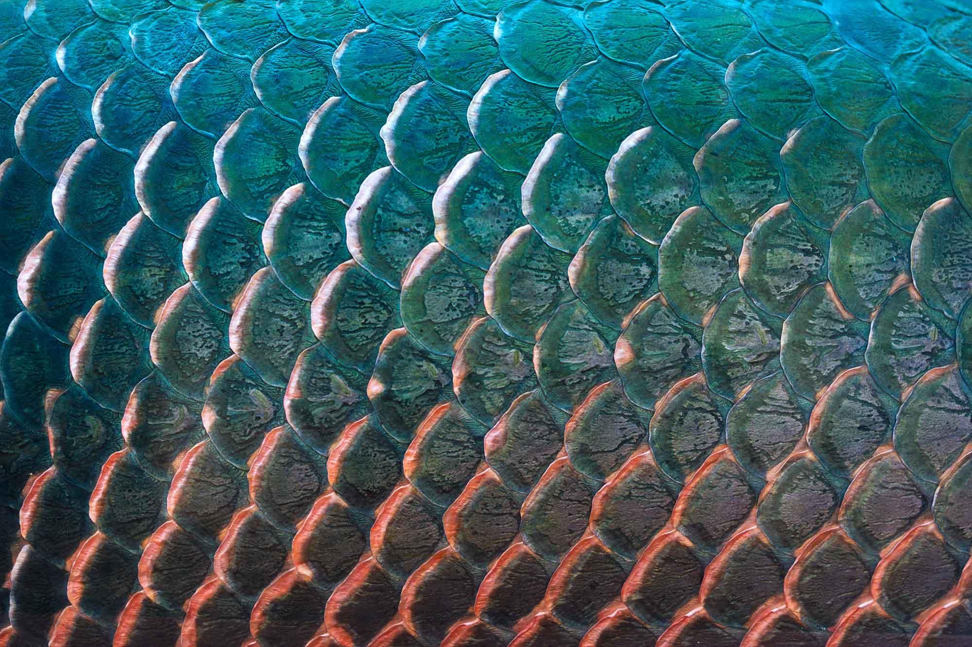 Biomaterialen: visschubben