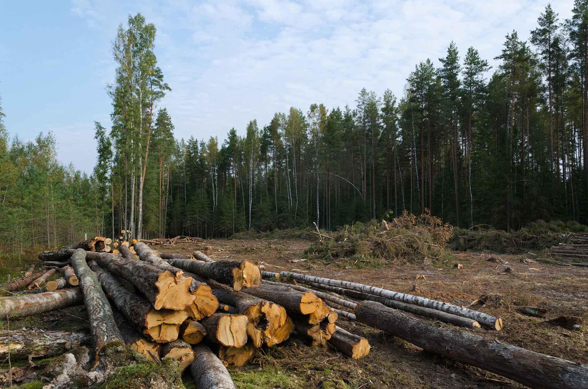 Een foto van een omgekapt bos is in de eerste plaats een communicatieactie (foto Andromed/Shutterstock)