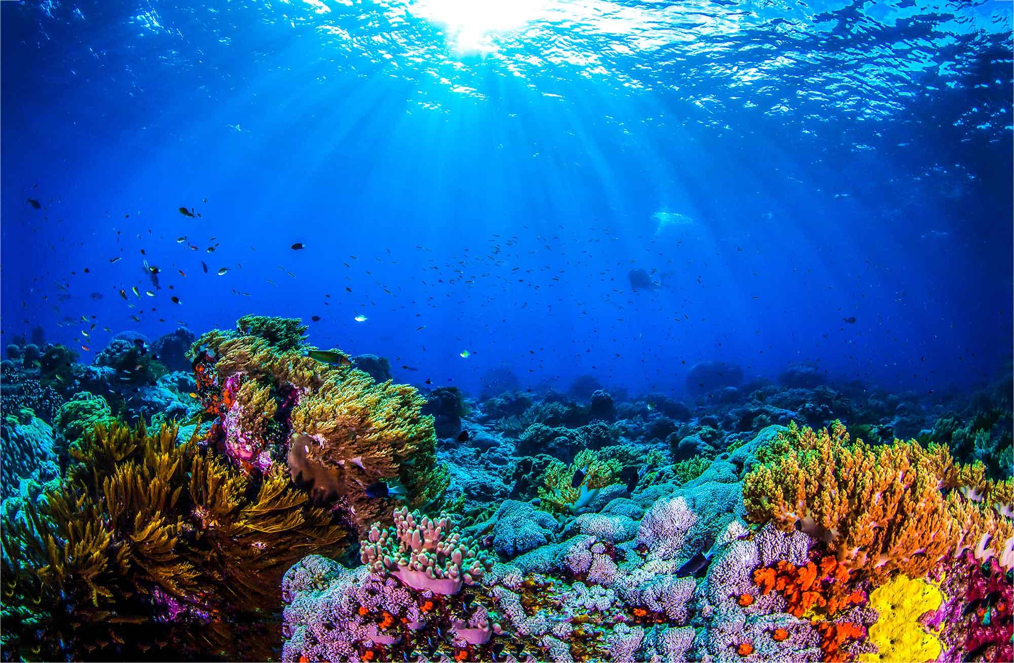 Soortenrijkdom onder water